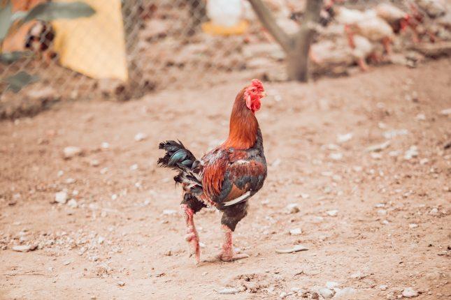 animal-avian-bird-2235161