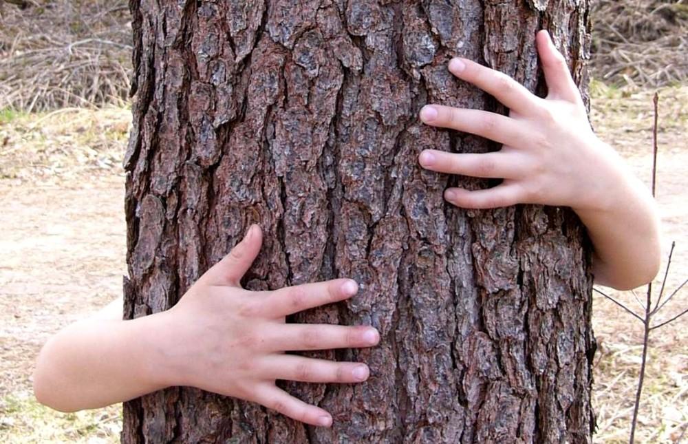 hug-a-tree-1317122